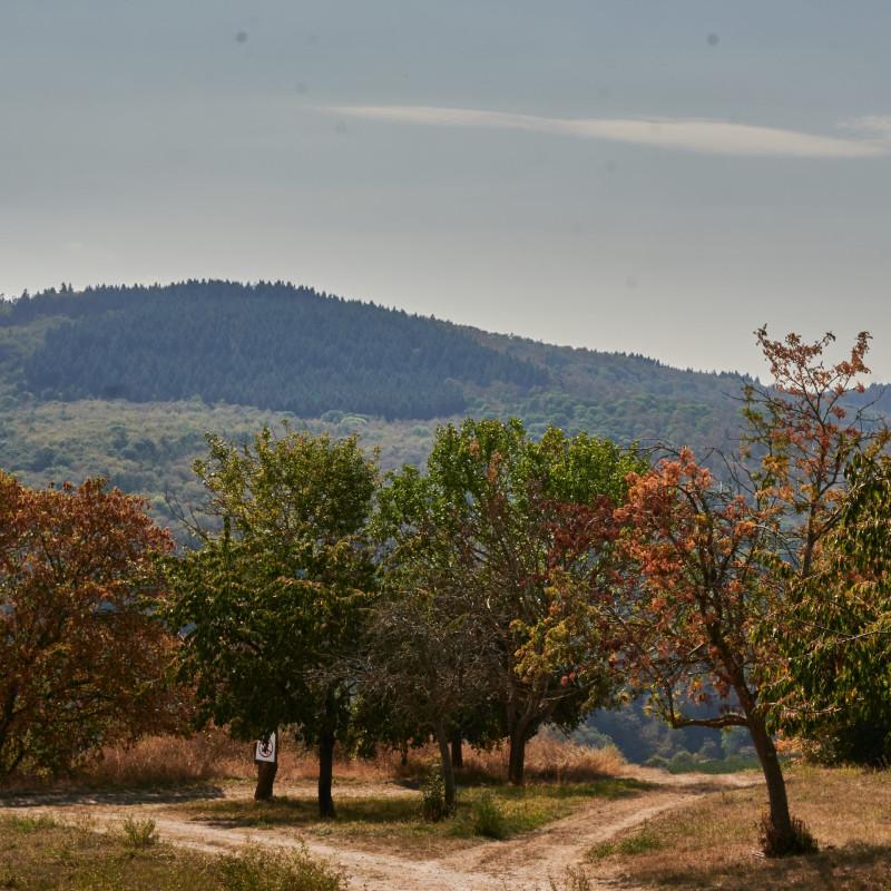 erste Herbstfarben auf dem Weg