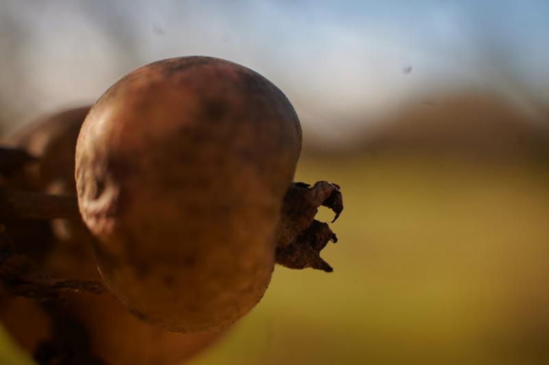 was vom Apfel blieb — könnte der Titel eines traurigen Sonnets sein