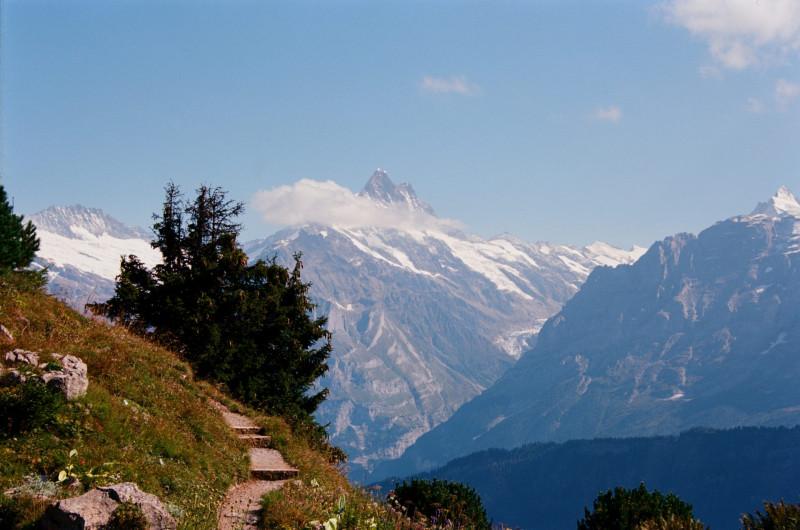 Alpengarten auf der Schynigge Platte