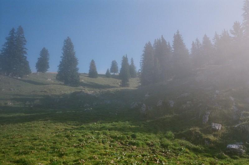 Die Waldgrenze liegt sehr hoch in dieser Region — bei ca. 2200 bis 2400 Meter über nN