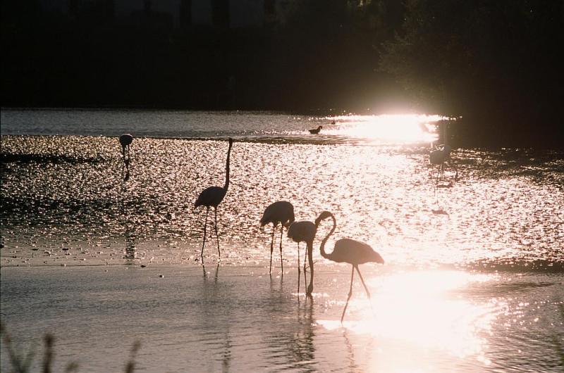 Der große rosa Flamingo ...