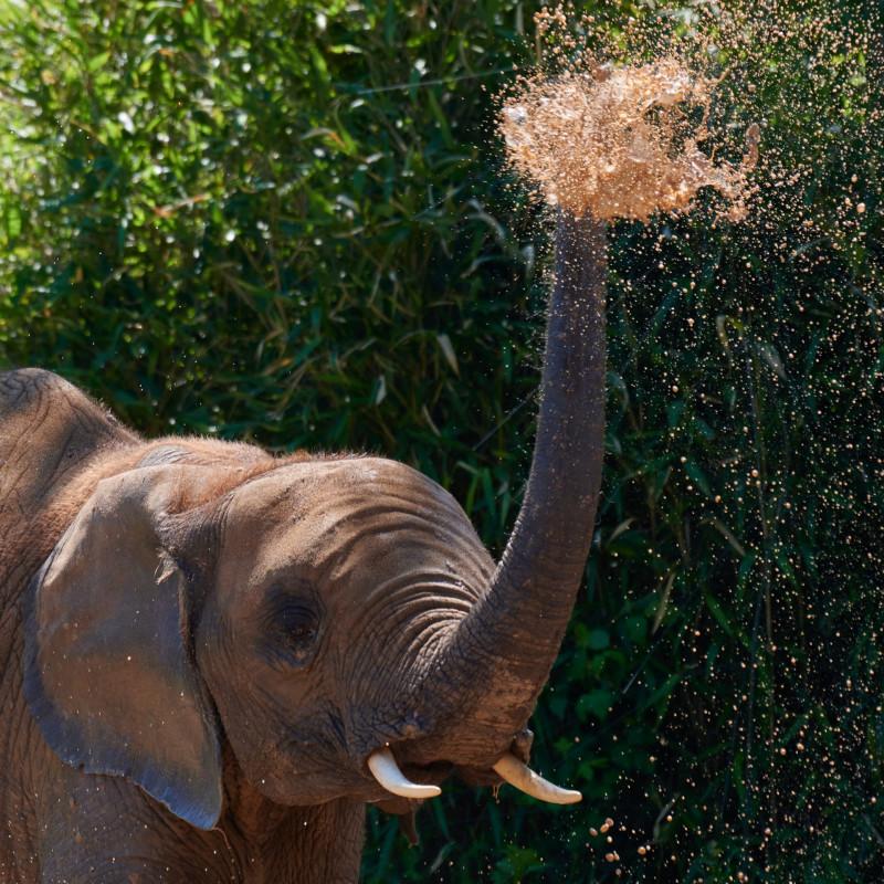 Ich nenne ihn Surus, nach dem Elefanten Hannibal Barkas