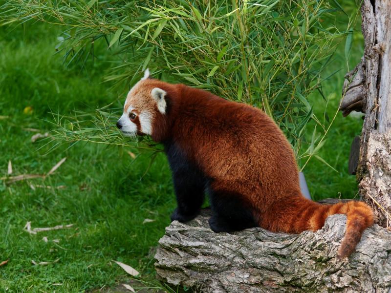 hatte ich schon erwähnt, daß die Pandas supersüß aussehen?