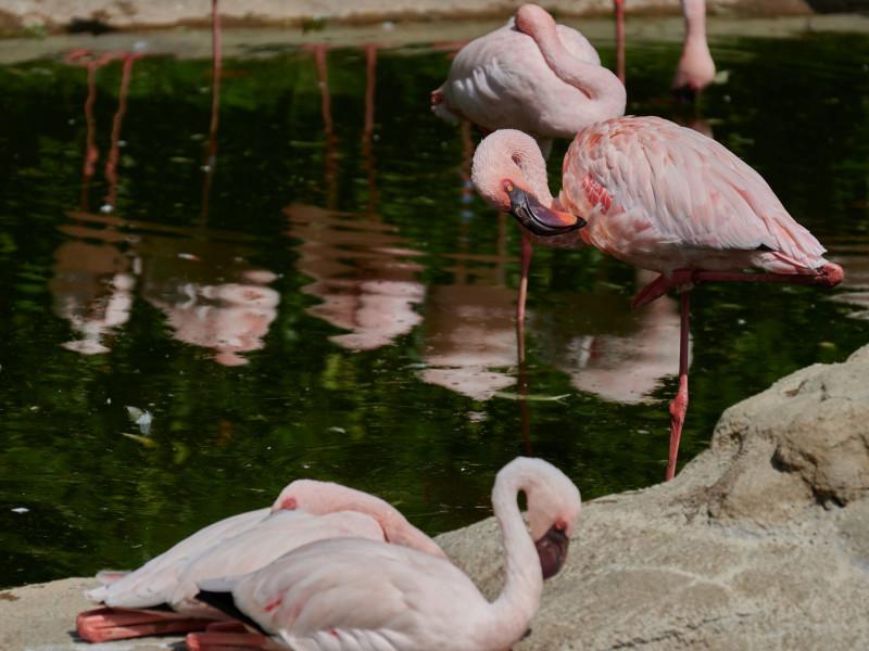 So intensiv gefärbt habe ich Flamingos sonst nirgendwo gesehen