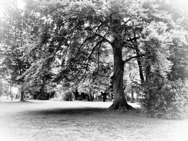Ein Blick in den 1823 angelegten Park