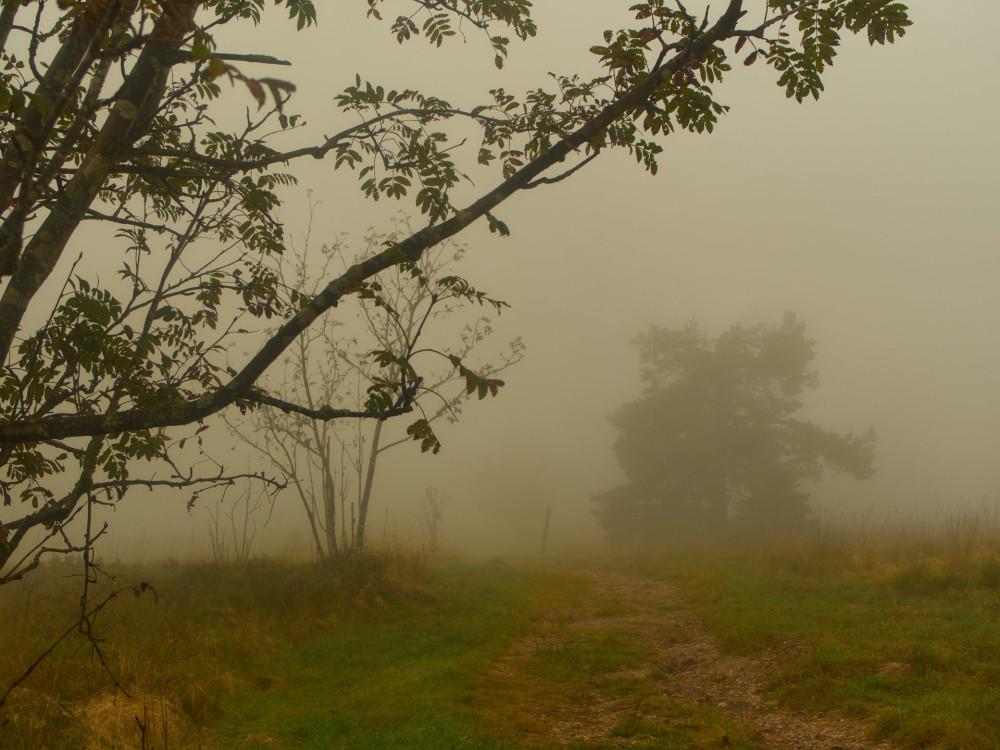 Unwirklich sieht die Landschaft im Nebel aus