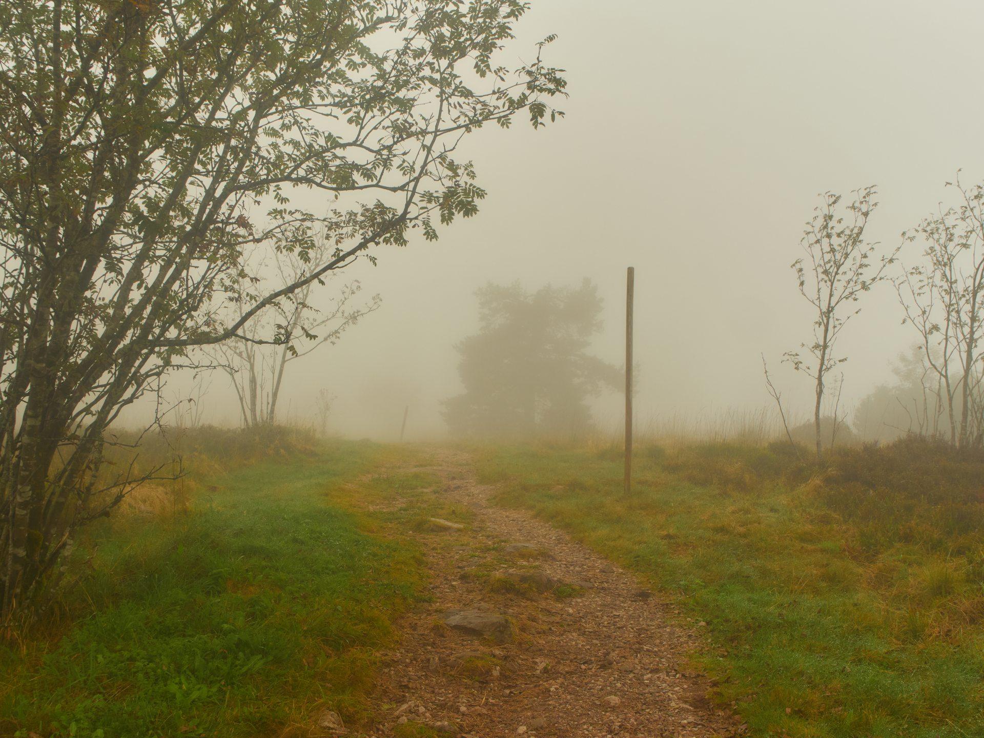Nebelstimmung im Nationalpark