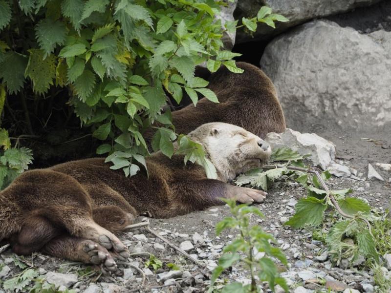 Das nenne ich Tiefenentspannung - Otter <3