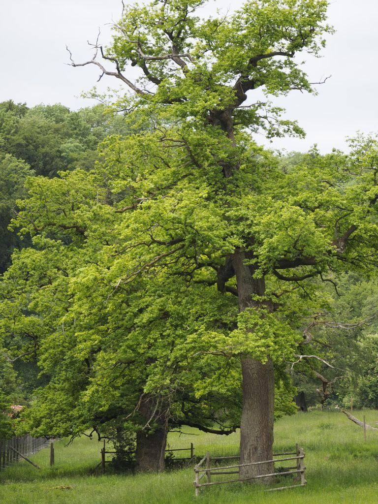 Der Park liegt in einem landgräflichen Jagdrevier und hat einen wunderschönen alten Baumbestand. Ein Traum