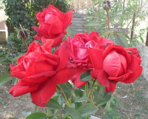 Метод розу