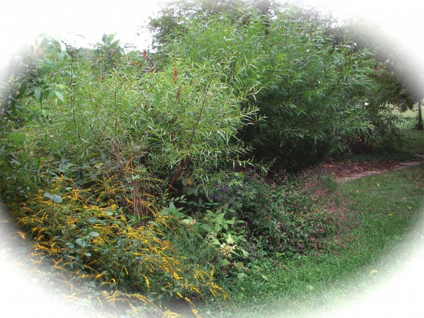 Wildflowers.10-1-12