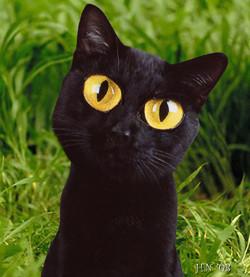 2_cat