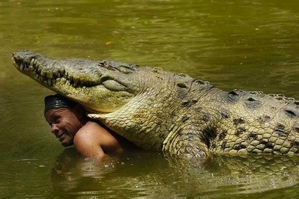 Krokodil-i-chelovek