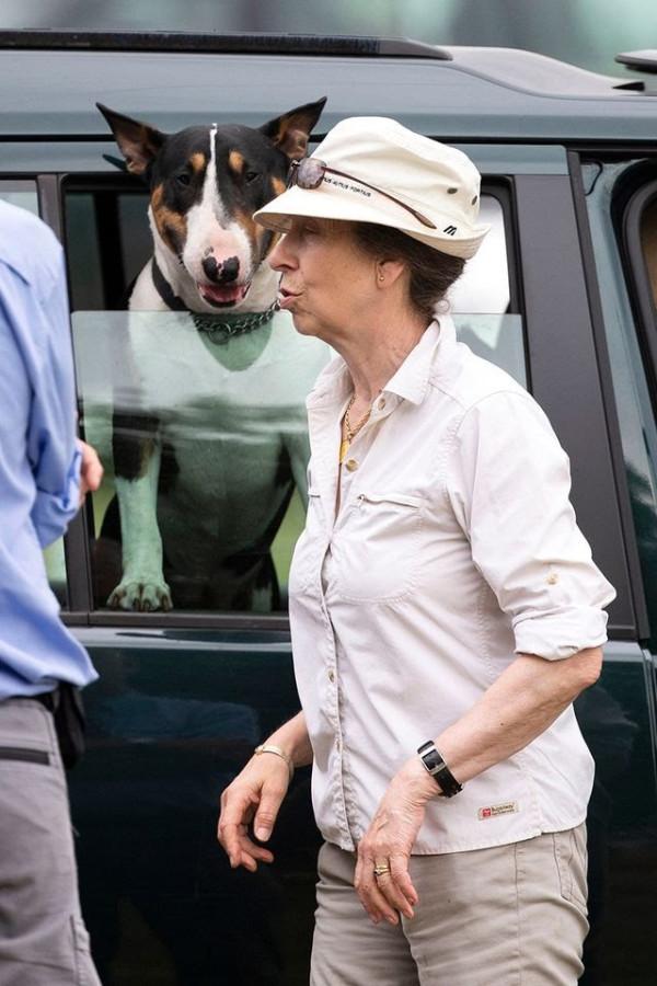 Собаки-агрессоры принцессы Анны.