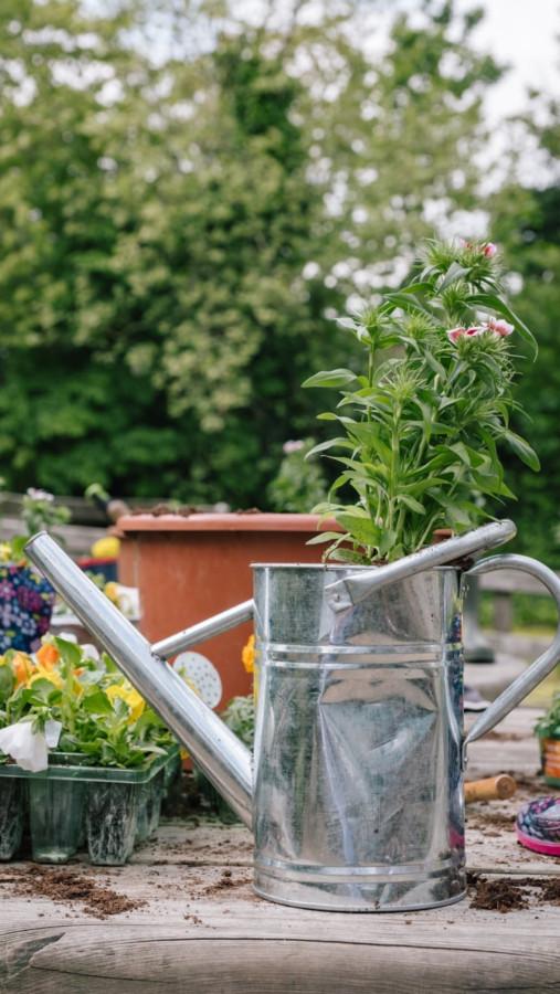 Новости про садовые дела герцогини Кэмбриджской.