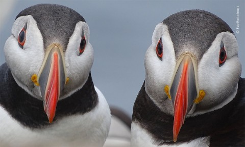 Анонс объявления победителя премии Фотограф дикой природы 2020.