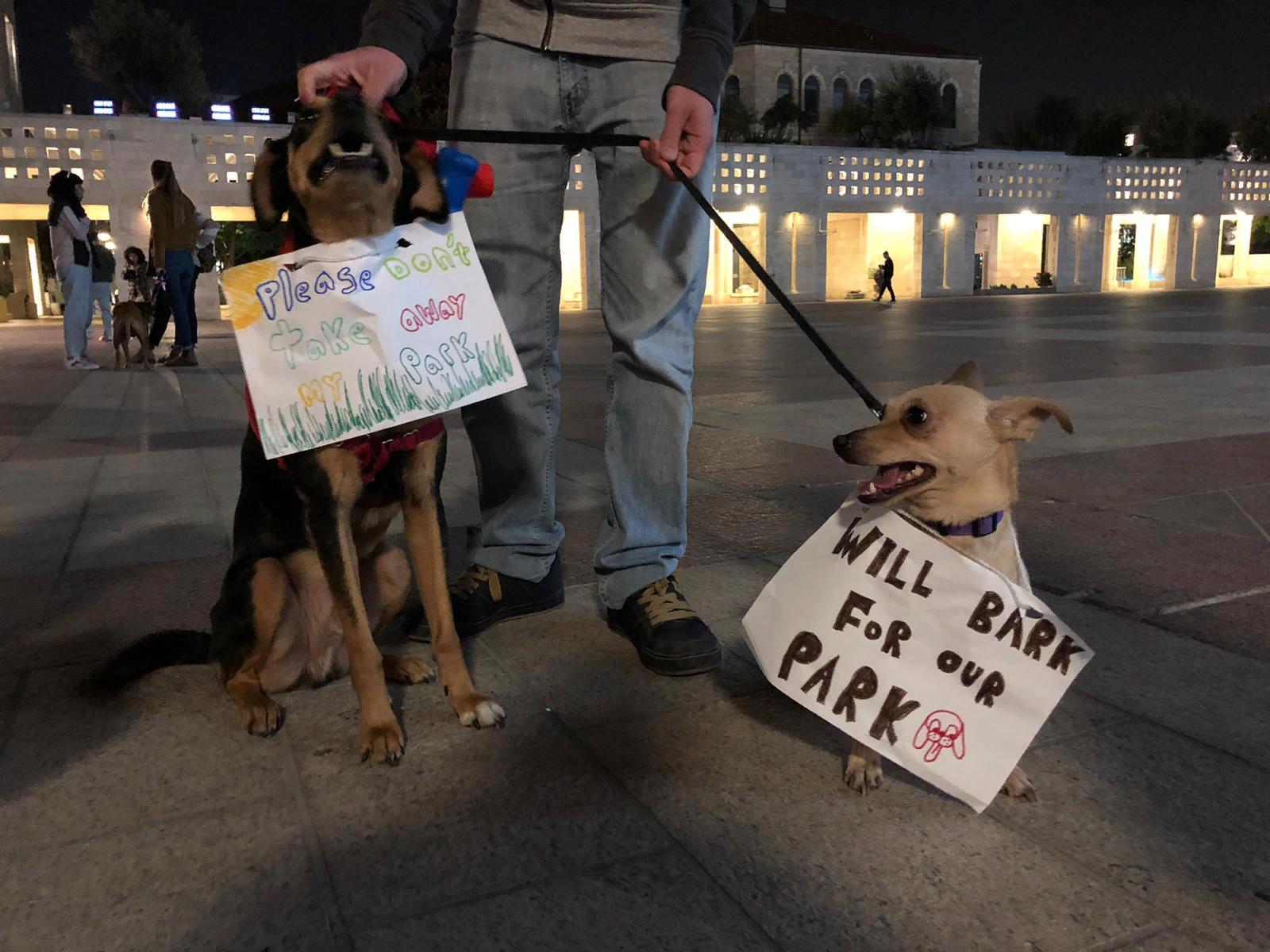 Собачники просят сохранить парк