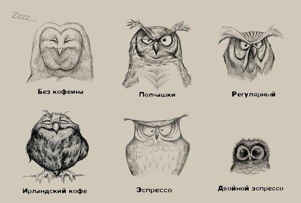 Кофейные совы