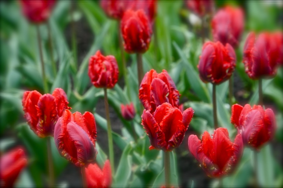 DSC03682 - pavasaris.jpg
