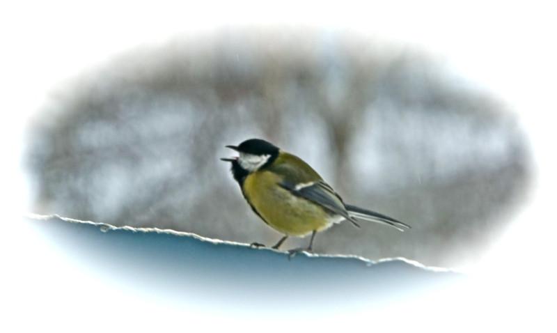 Птички, птички, невелички