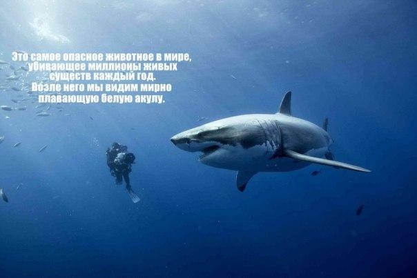 человек-акула-дайвер-чудовище-690754