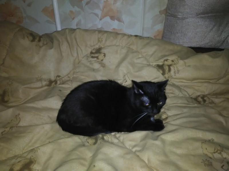 Кошка-мама, альфа-кошка Воскресия (Креська, 14 лет) редактора Александры. Креська не любит фотографироваться, поэтому поймать её можно только спросонья.