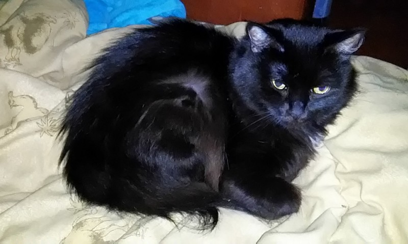 Кошка-дочка, нежнейшее и милейшее существо Лукерья (Лушка, 8 лет) редактора Александры. Лушка тоже не охотница до фотосессий, потому не при параде.
