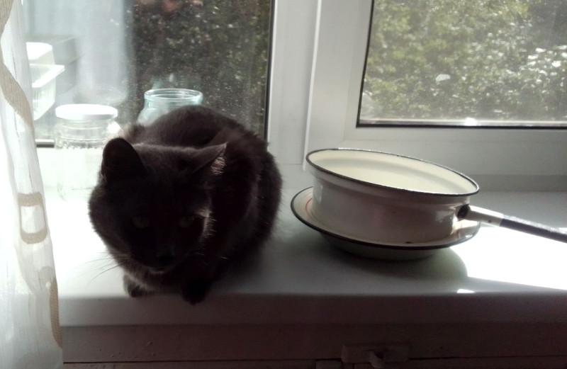 Уломали... (кошка Елены — Ксюша)