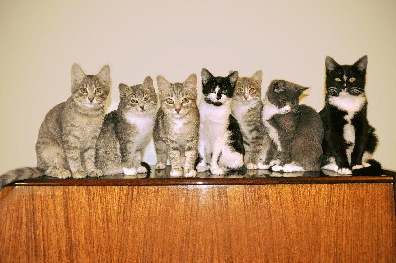 Семеро одного не ждут
