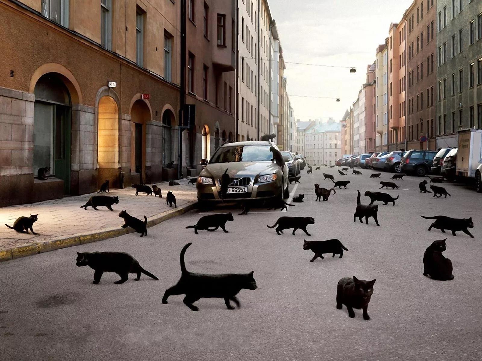 Простите, здесь чёрная кошка дорогу не перебегала?