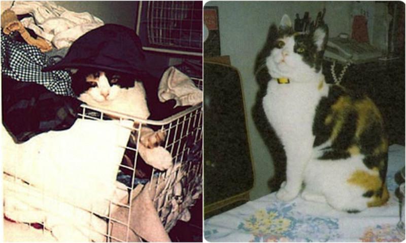 Далила: любимая кошка Фредди Меркьюри