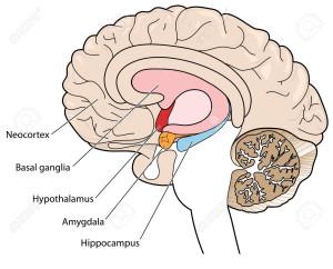 гиппокамп