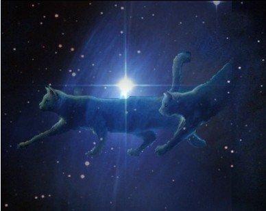 звёздные коты