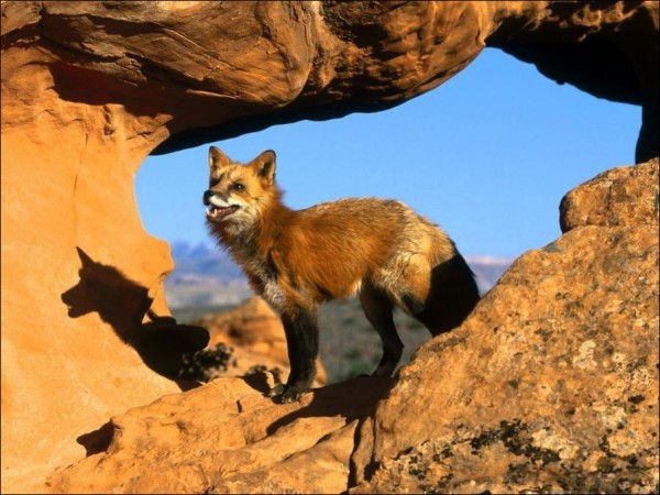 fox-89