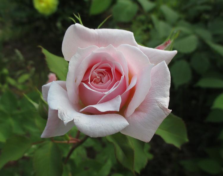bouquetqueen