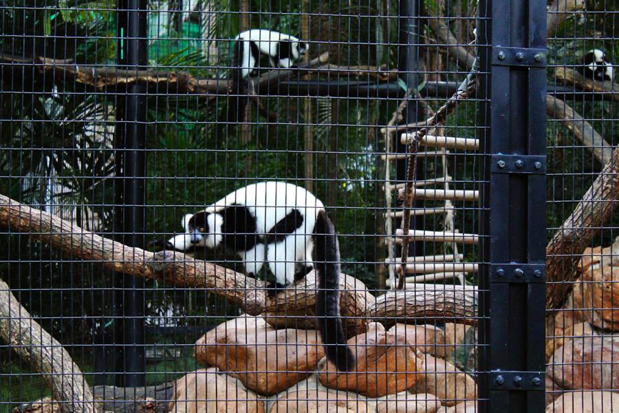 17 - Zoo