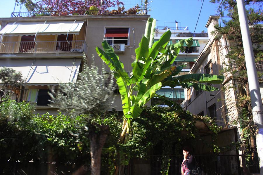 29 - Palms
