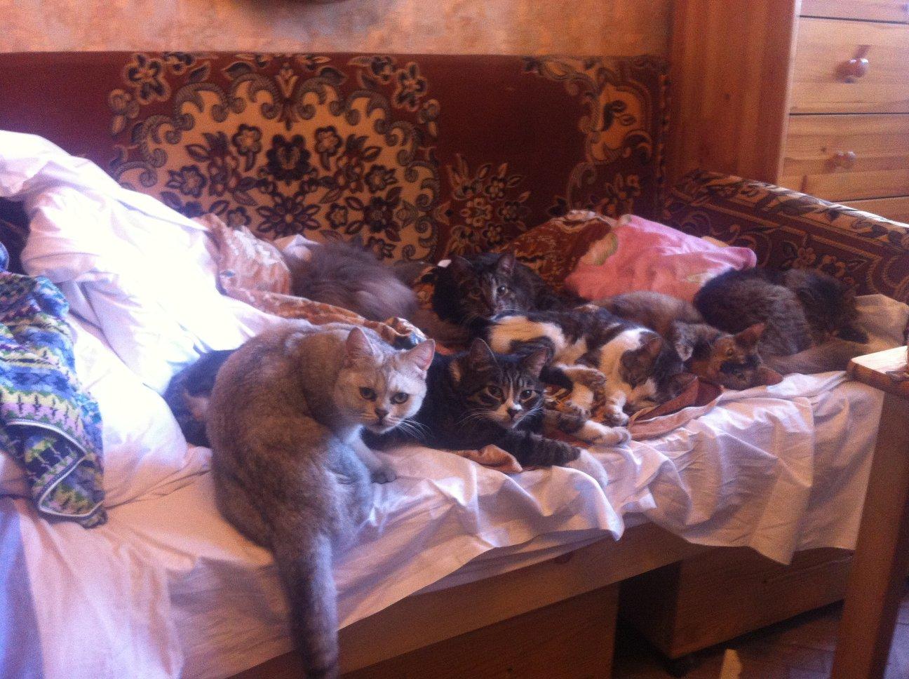 кошки на кровати