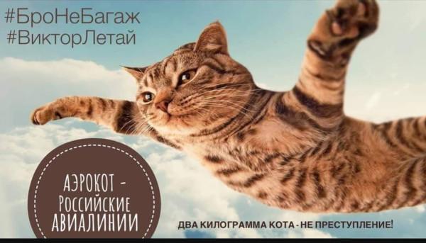 Аэрокот российские авиалинии 2 кг не преступление.jpg