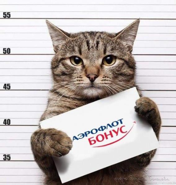 Мили, кот и аэрофлот бонус арестант.jpg