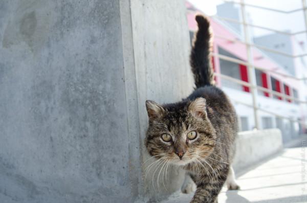 Пятничный кот с Moscow Raceway.
