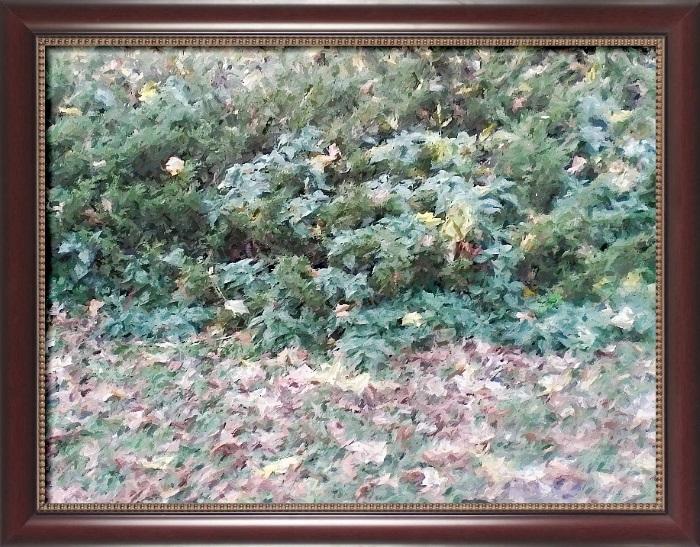 Осенний ковёр Черниговского Вала