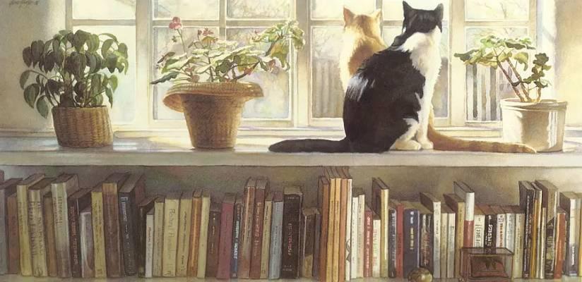 «Книжные полки», Стив Хэнкс