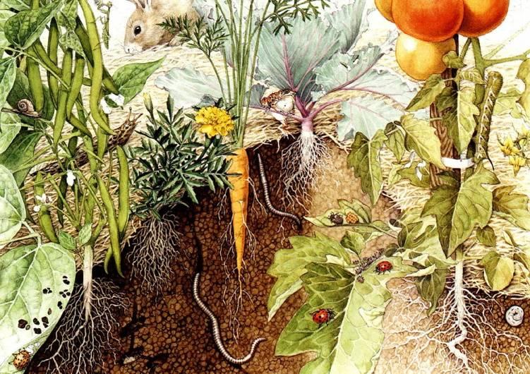«Огород», Бирута Акерберг Хансен