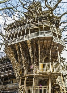 tree-house_2.jpg