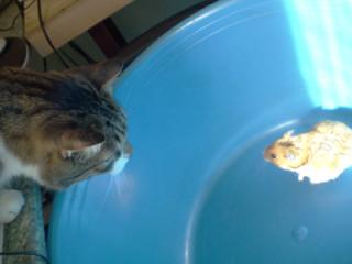 кот и хомяк