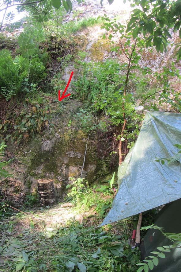 гнездо Кулика А6нет