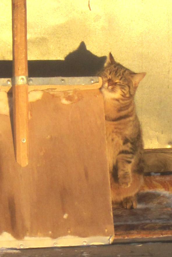 кошка А6нет