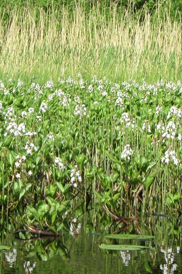 5 водяные цветы А6нет