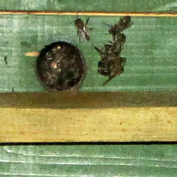 8 пчёлы А6нет